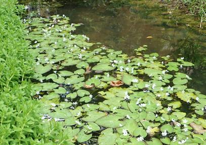 本場整備螢火蟲復育的小溪