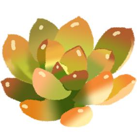 多肉植物圖案