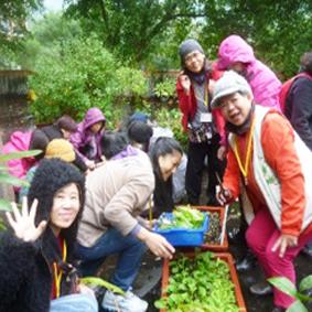 園藝分場樂活養生種植蔬菜