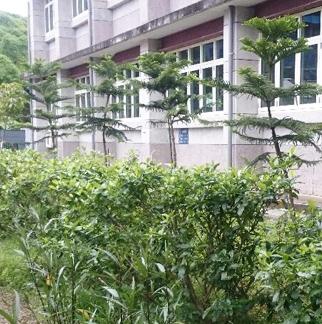 整地後植樹及種草綠美化