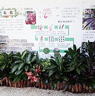 角落改善後以熱帶雨林植栽為主題2
