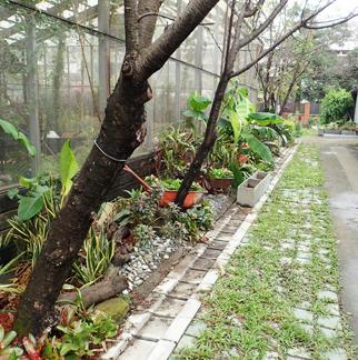 增加路緣綠帶,整理網室週遭植栽