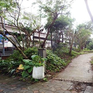 示範教學農舍週遭環境整理及大樹修剪1