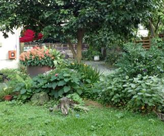 農藝組辦公室環境綠美化-農藝組