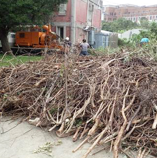 堆肥場枯枝清理