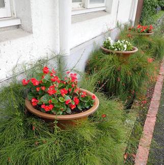 場辦花壇及花丁子立體綠化改善1
