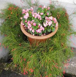 場辦花壇及花丁子立體綠化改善2