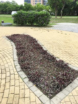 造型花壇依方位顏色栽入相對之地被植栽
