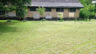 圓環側草坪剎除及植樹