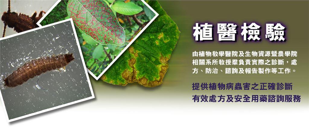 植醫檢驗以蟲及植物蟲害圖片,代表農場有提供植物病蟲害的服務。