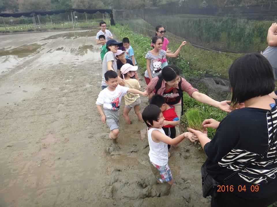 水田環境教育(插秧體驗)
