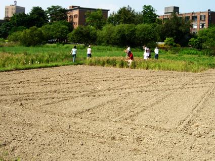 試驗田水稻種植實習