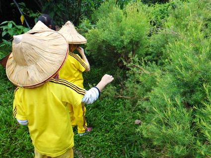 參觀澳州茶樹