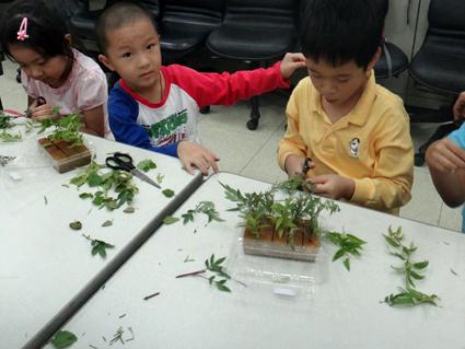 DIY課程-植物阡插