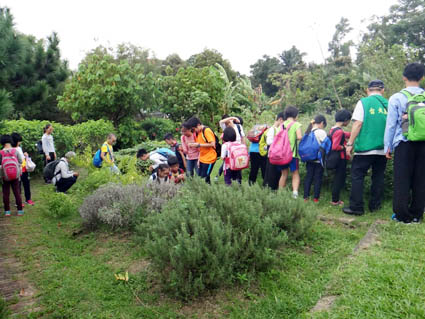 參觀香草植物