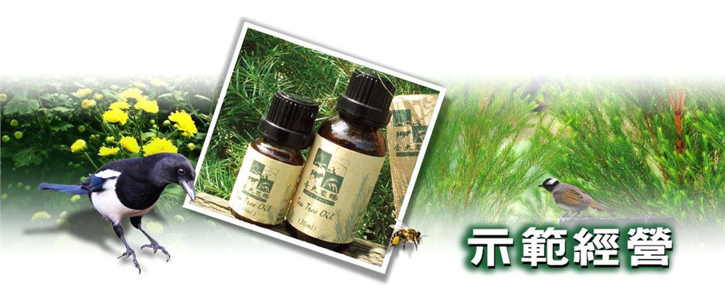 示範經營標題影像,內容有澳洲茶樹及菊花以及茶樹精油及農場環境有喜鵲、白頭翁等鳥類。