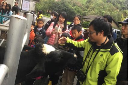 導覽活動—乳牛與解說員親密互動