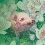 示範經營─小型豬