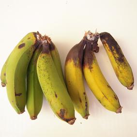 香蕉軸腐病