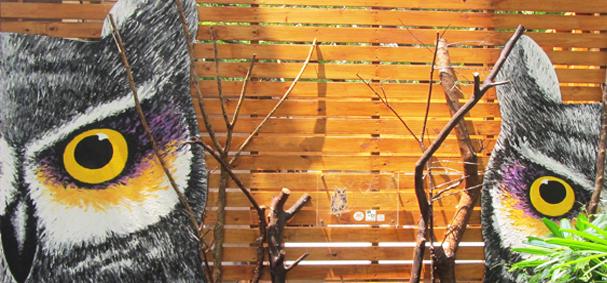 農產品展示中心外觀右側有領角鴞裝置藝術